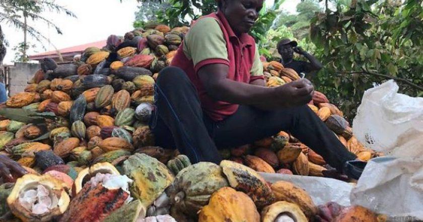 Los primeros 8 países productores de cacao