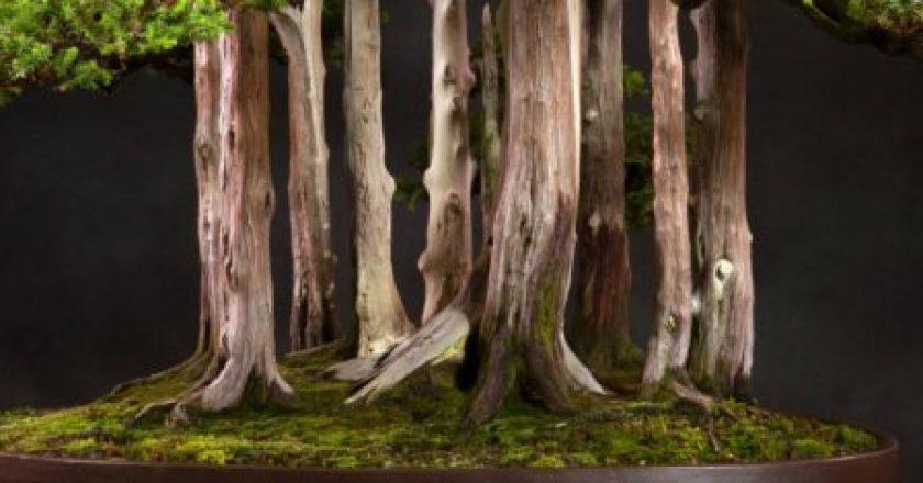 Los 8 bonsáis más extraordinarios del mundo