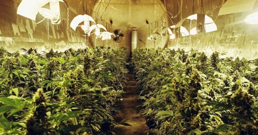 El sucio secreto de la industria de la marihuana