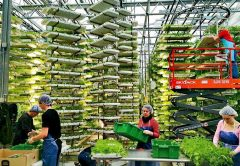 Una idea simple pero revolucionaria: agricultura vertical