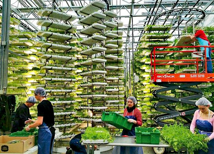 Una idea simple pero revolucionaria: agricultura vertical