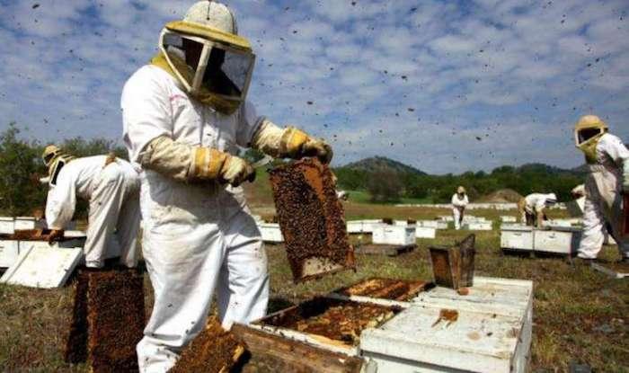 Los 10 países productores de miel más importantes del mundo