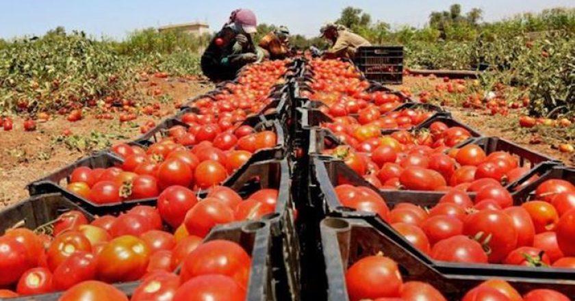 Los 10 principales países productores de tomate del mundo