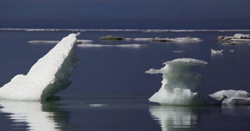 Malos presagios del Ártico. El calor está alterando el ecosistema