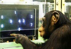 Los 10 animales más inteligentes de nuestro planeta