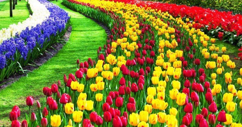 Los 10 tulipanes más bellos del mundo