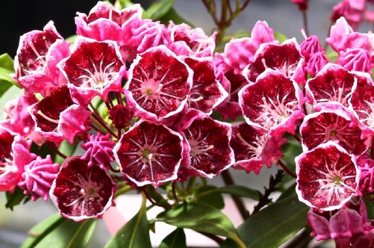 Las 10 flores más bellas y venenosas de la Tierra