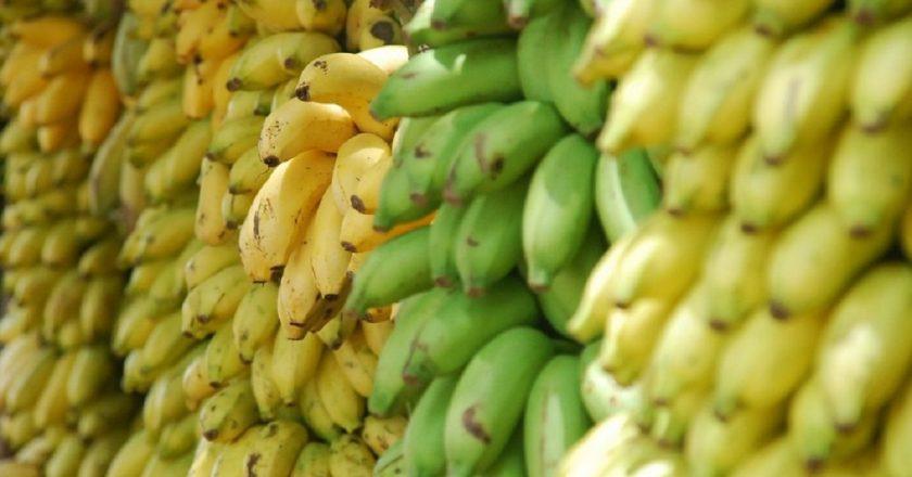 Todo, todo, absolutamente todo sobre las bananas
